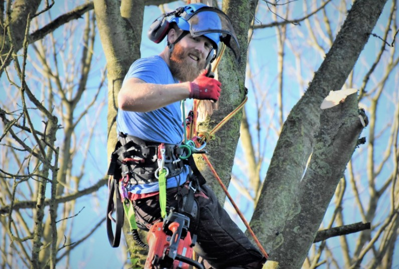 everything you need to know about arborists